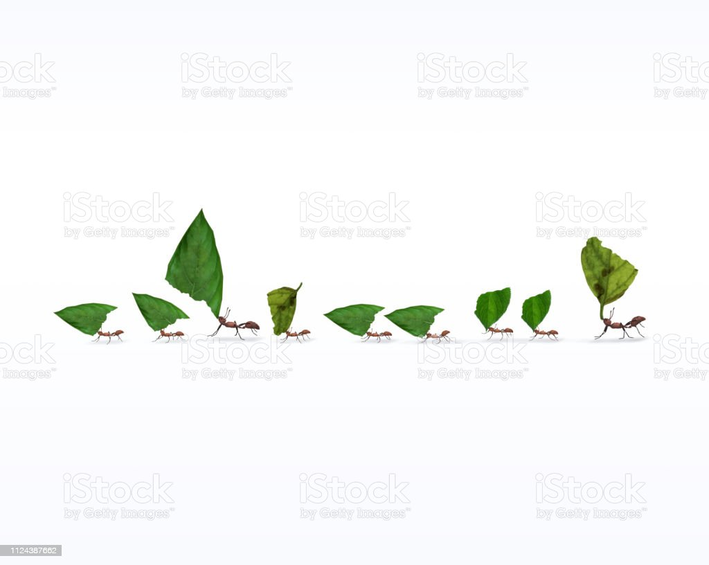 Fire Ants Marching In Line Carrying Leaves Fire ants marching in line carrying leaves, teamwork concept, 3d render, Animal Stock Photo