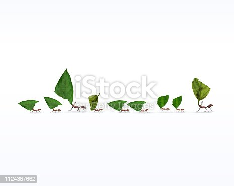 istock Fire Ants Marching In Line Carrying Leaves 1124387662