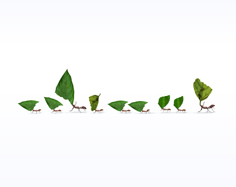 Fire ants marching in line carrying leaves, teamwork concept, 3d render,