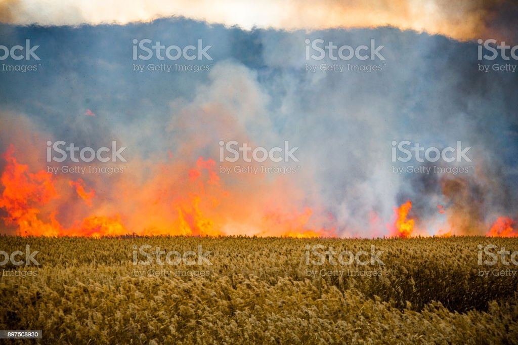Fire at the edge of the mountain stock photo