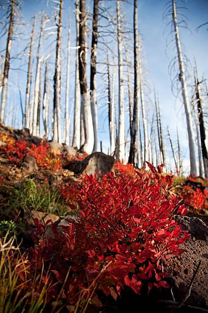 Fire bloom stock photo