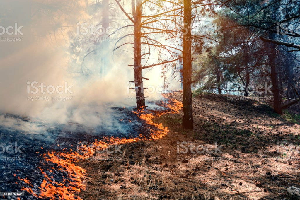 fire burn forest stock photo