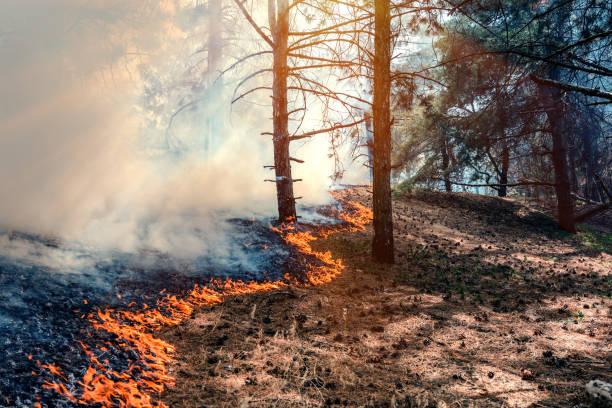 fire burn forest