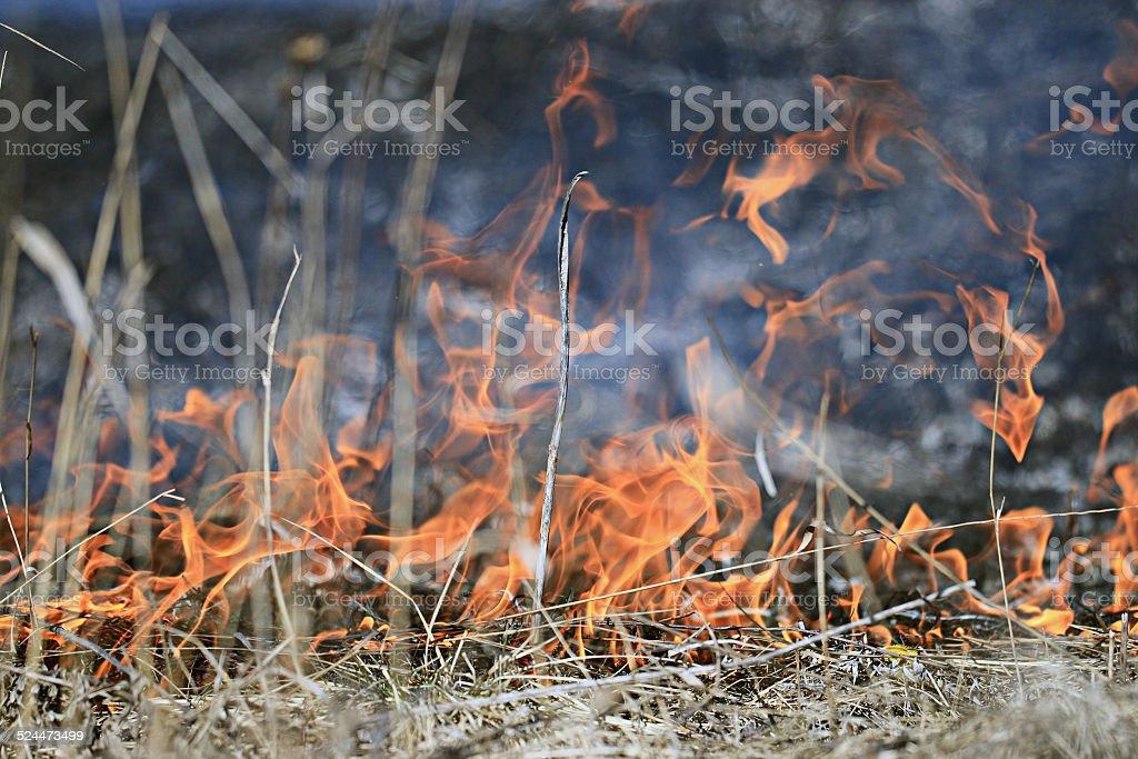 fire burning dry grass stock photo