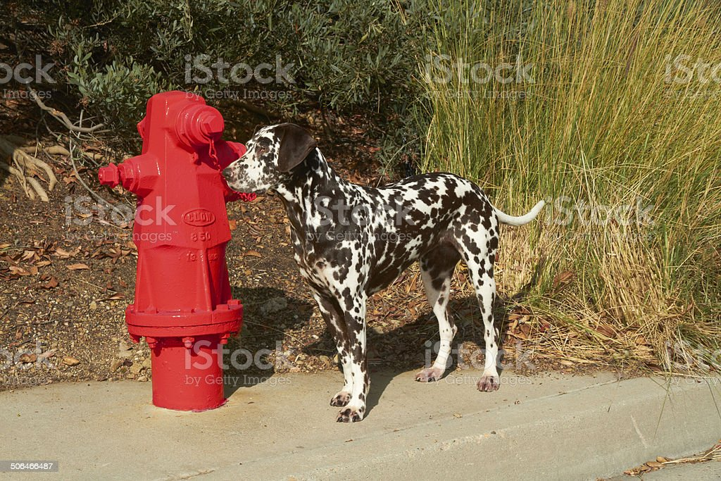 Fire dog stock photo