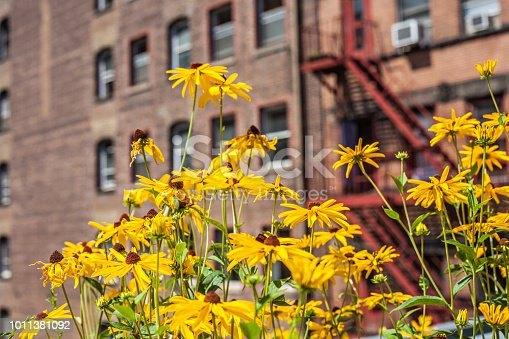 Yellow flowers brighten up a brick fire escape