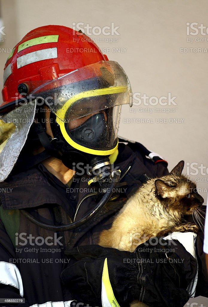 Fire fighter saving cat stock photo