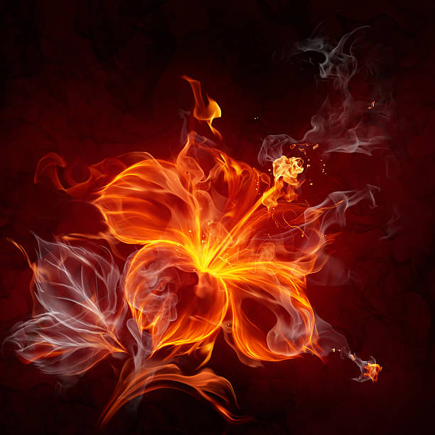 Fire flower stock photo
