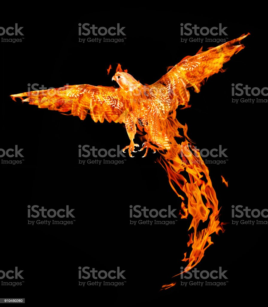 flying flame falcon isolated on black abckground