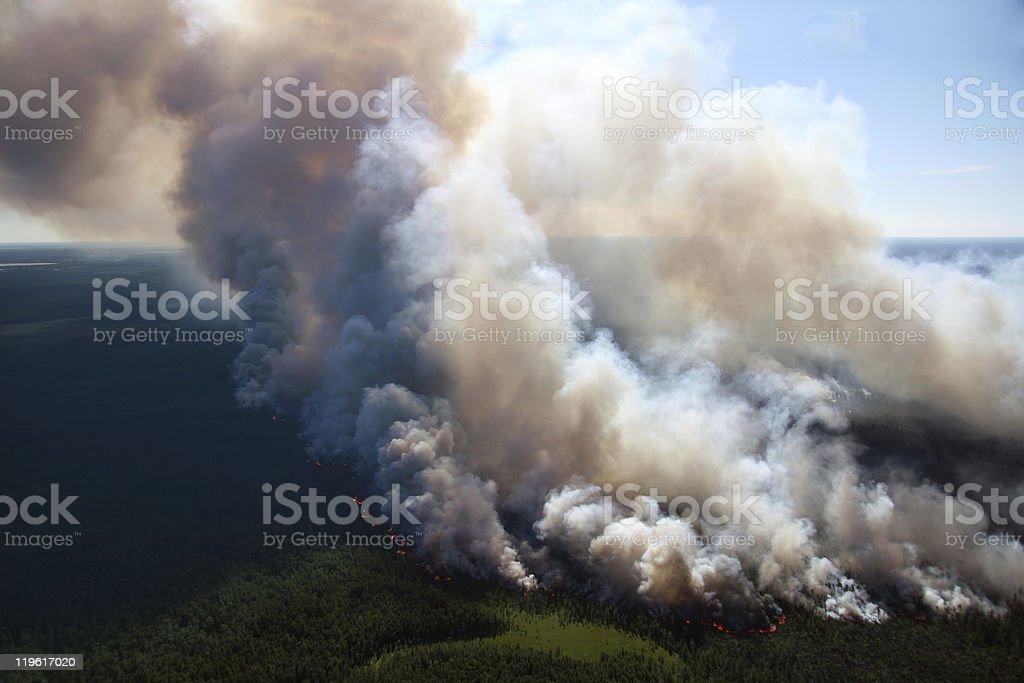 Bosque de incendio - foto de stock