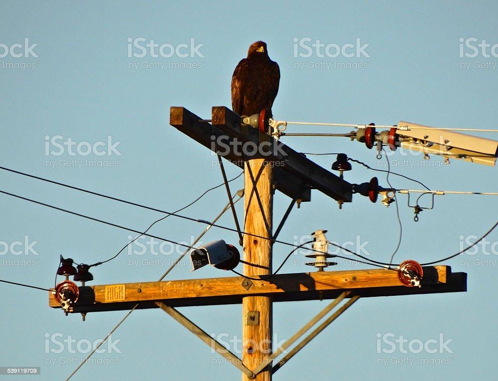 Fire Golden Eagle stock photo