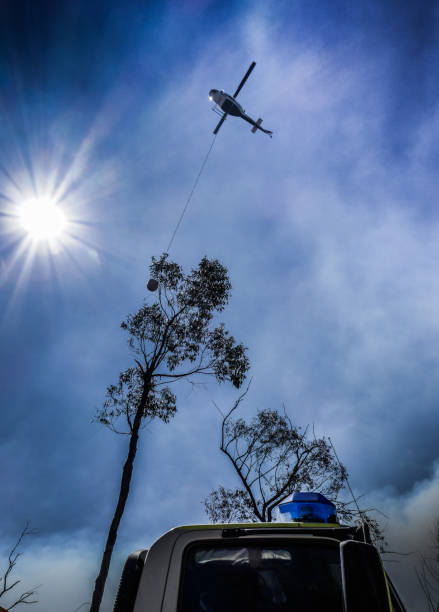 Fire Helicopter Support - Australian Bush Fires – Foto