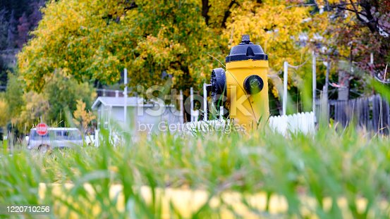 A Yellow civil fire hydrant, surrounded with Yellow Autumn colored bush and trees, Jasper, Canada.
