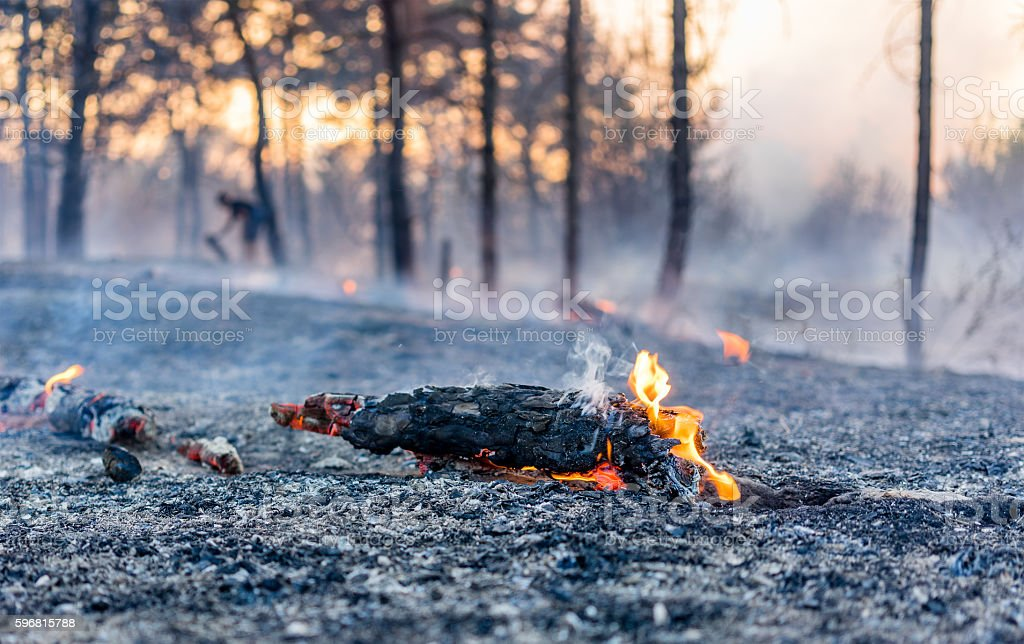 Fire in a forest stock photo