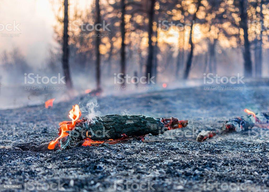 Fuego en un bosque  - foto de stock