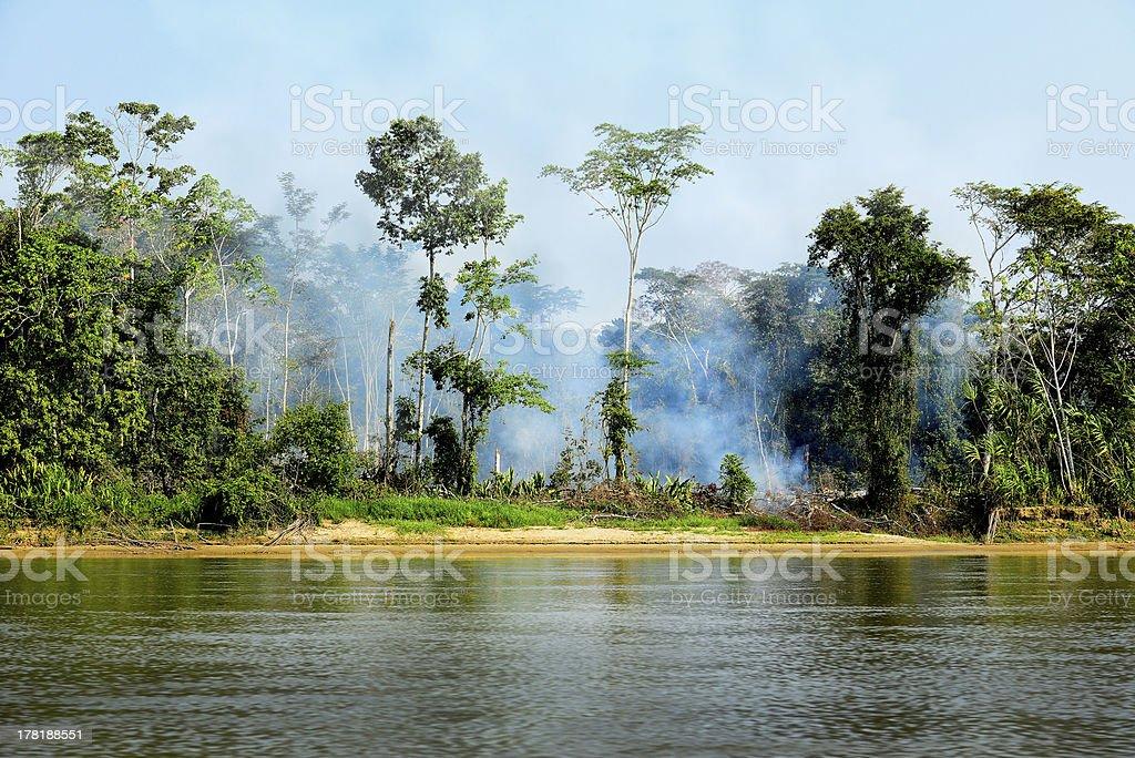 Fire in a Jungle stock photo