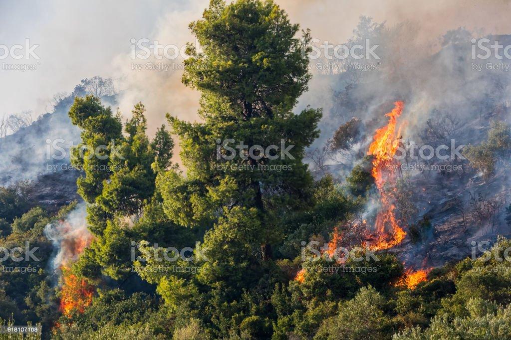 fire in a pine forest in Kassandra, Chalkidiki, Greece stock photo