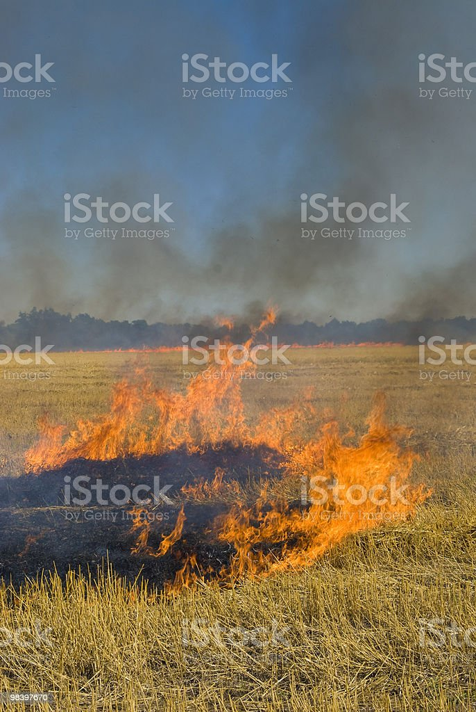 fire in a wheat field royalty-free stock photo