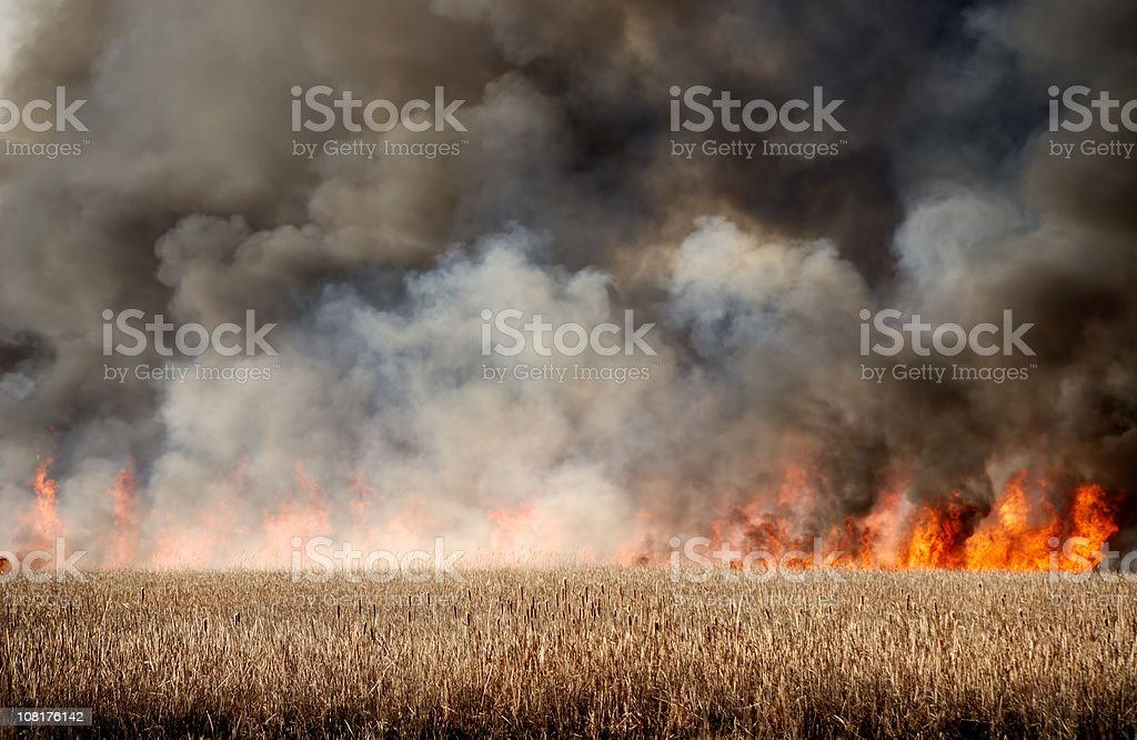 Fire in Dry Marsh royalty-free stock photo