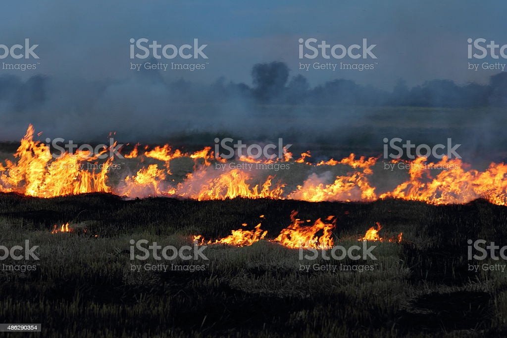 Fire in rice fild stock photo