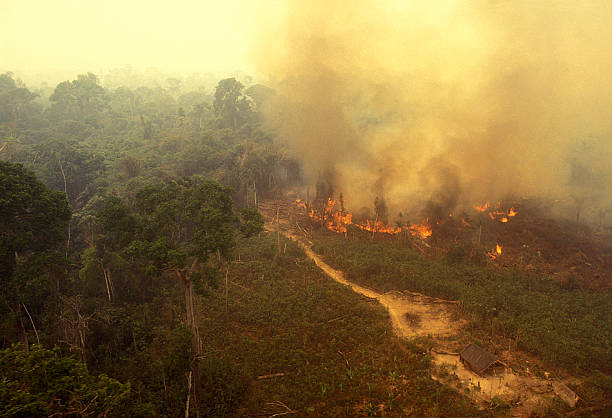 Fire in the Amazon Aerial view of a fire in the rainforest. amazon region stock pictures, royalty-free photos & images