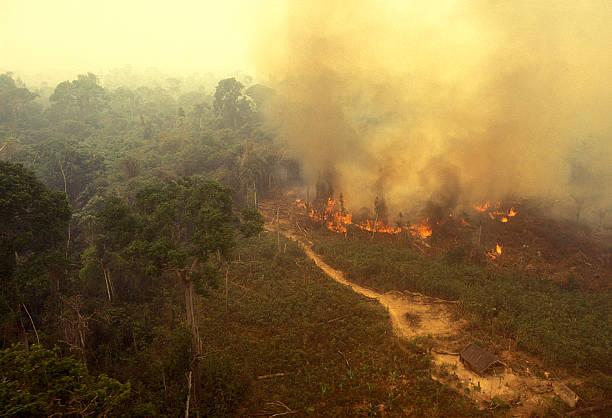 feu dans la forêt amazonienne - desastre natural photos et images de collection