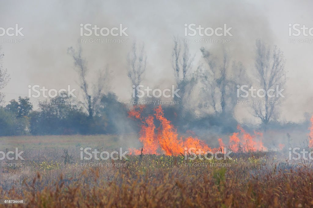 Fire in the autumn field stock photo