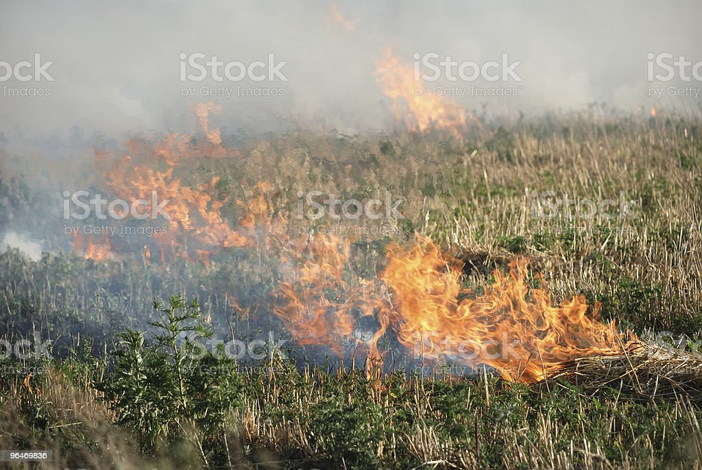 Fire in the dry grass field royalty-free stock photo