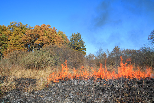 Fire in the field and the forest burns dry grass and trees the fire harms nature