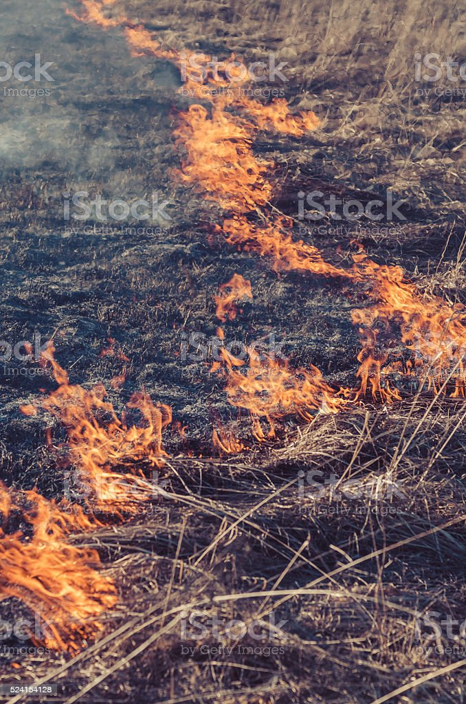 fire in the field of a dry grass stock photo