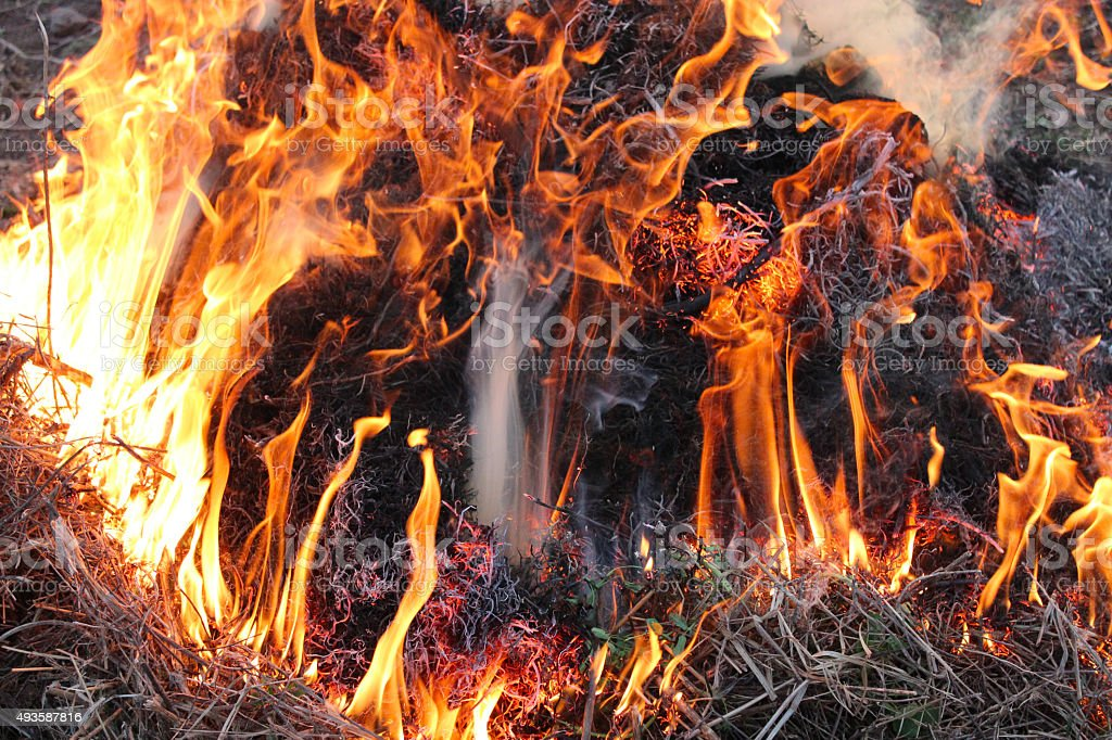 Fire in the field stock photo