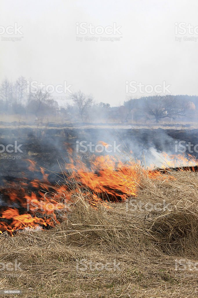 Fire in the field. royalty-free stock photo