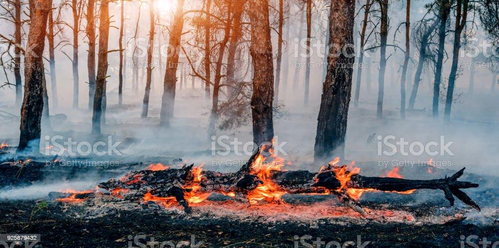fuego en el bosque de mucho humo y fuego. - foto de stock