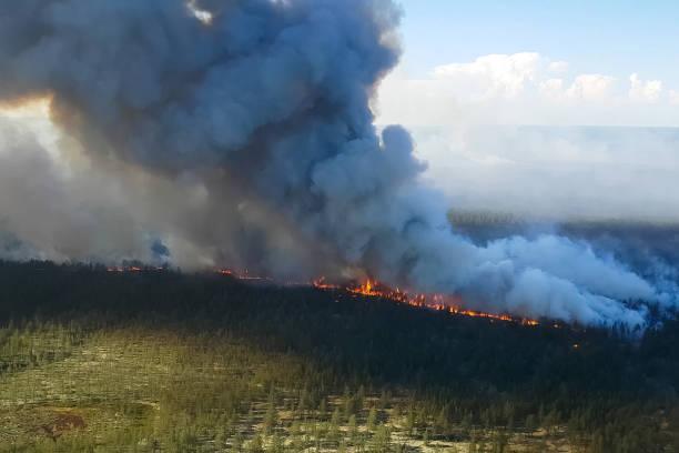 brand in het bos, brandende bomen en gras. natuurlijke branden - siberië stockfoto's en -beelden
