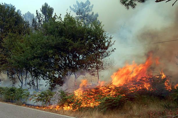 Feuer im forest II – Foto