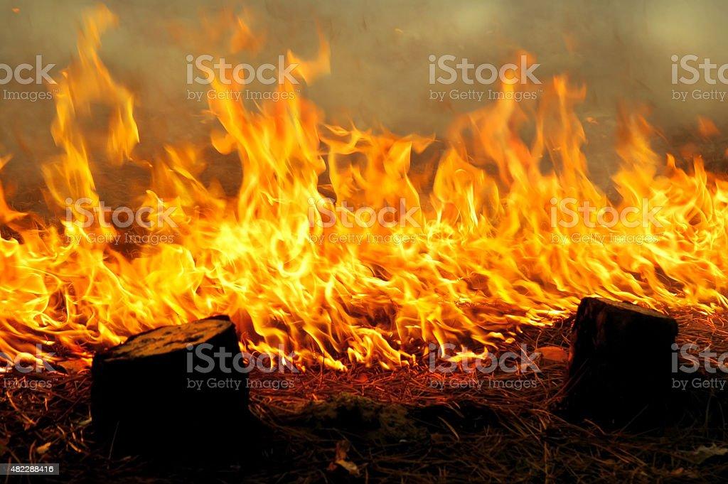 Feuer im Wald – Foto