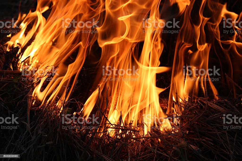 Fire in the forest stock photo