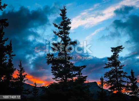 Pine trees are silhouetted against a dramatic  late evening Alaskan sunset