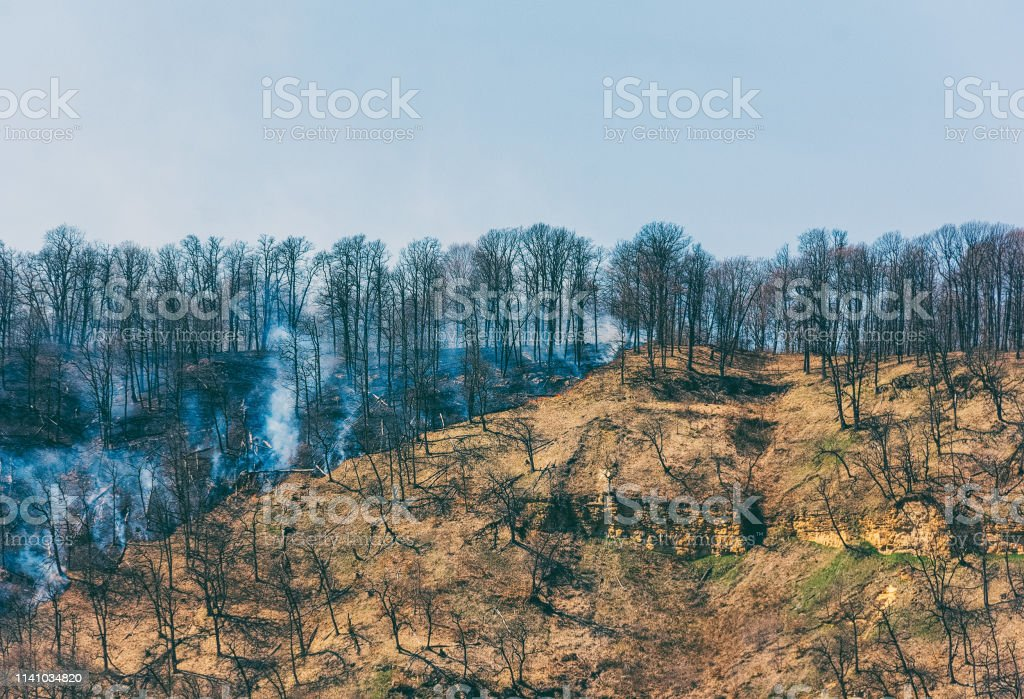 fire in the spring forest, the concept of natural disaster...