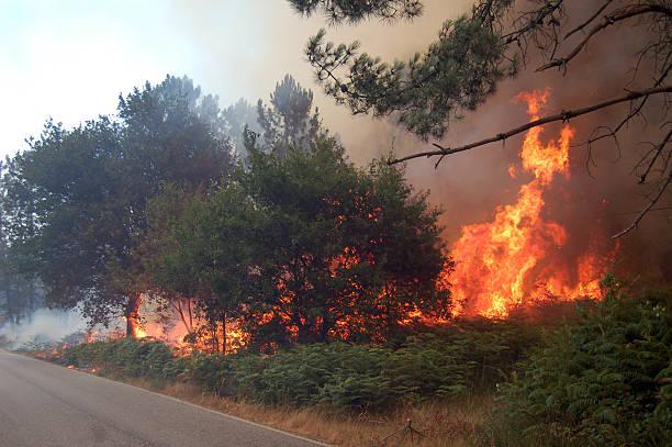 Feuer in der Nähe der Straße – Foto