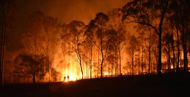 Fire Gregory fire queensland australia stock pictures, royalty-free photos & images