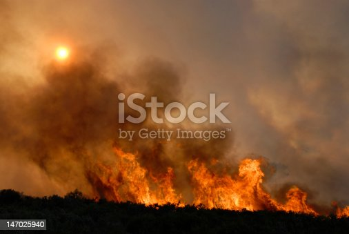 Fire and forest - Batalha city - Portugal - Europe