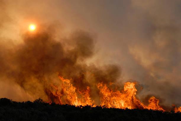 fire - bosbrand stockfoto's en -beelden