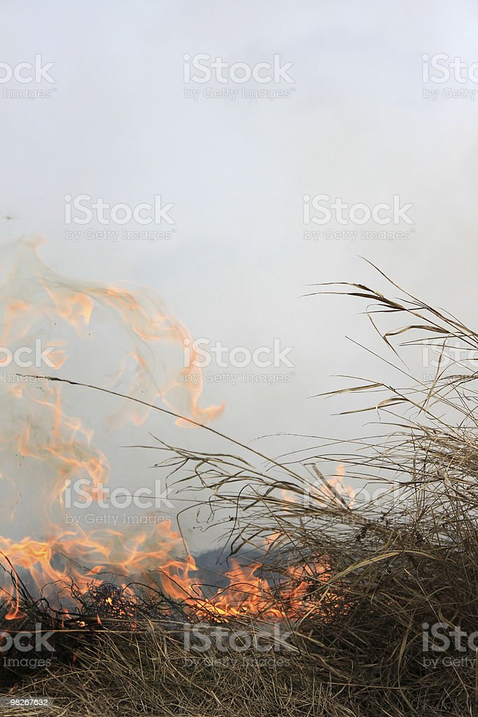 Fire. royalty-free stock photo