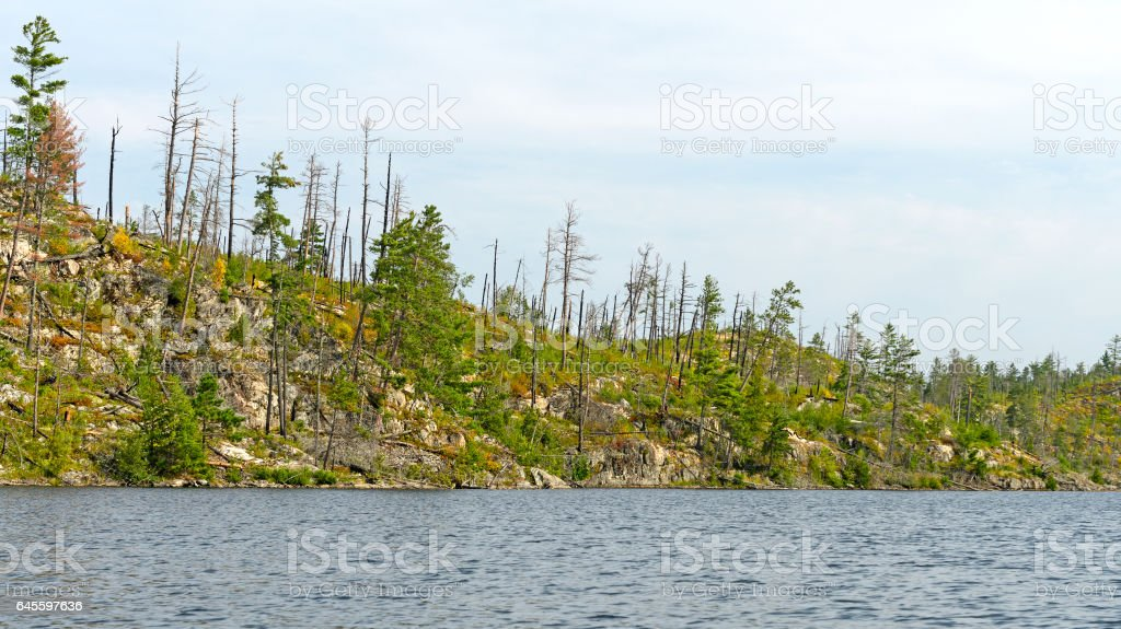 Fire Scarred Ridge in the North Woods stock photo