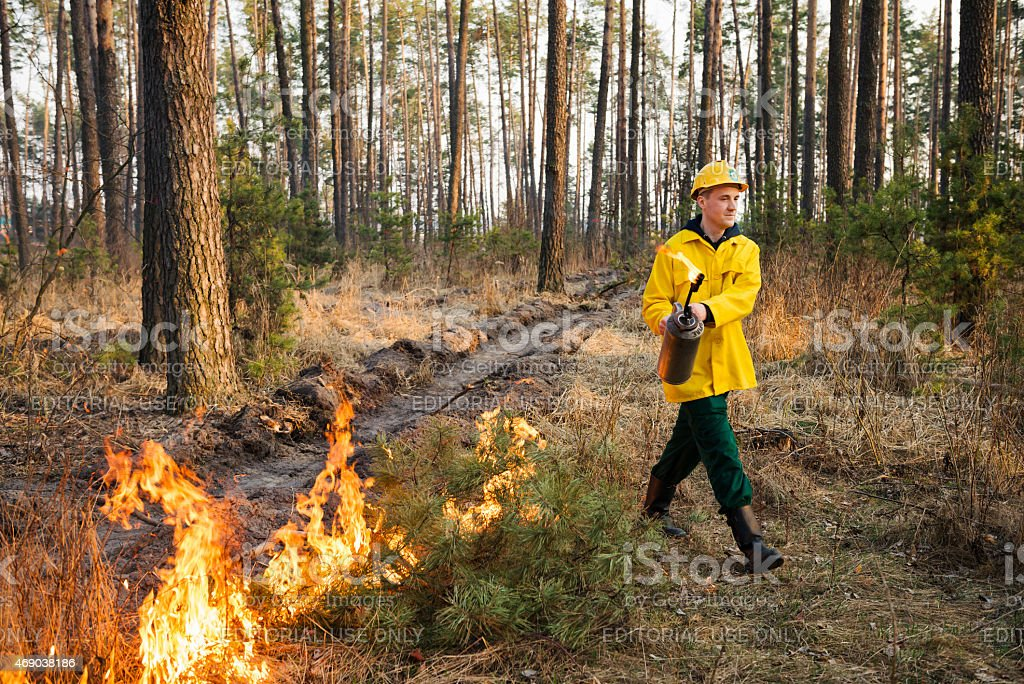 Firefighter using a controlled fire in the forest stock photo