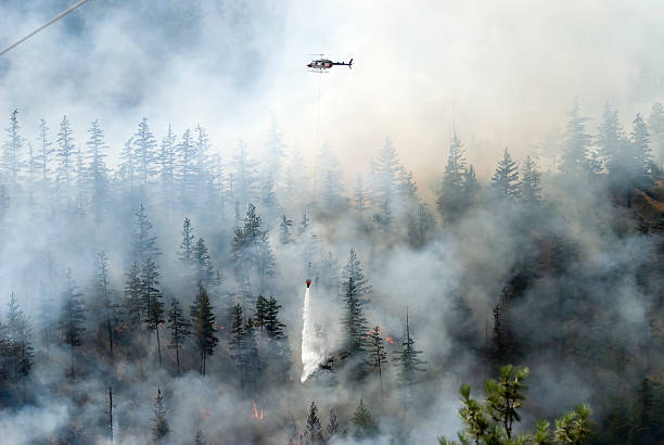 Firefighting a forest fire with white smoke Aerial firefighting for a forest fire british columbia stock pictures, royalty-free photos & images