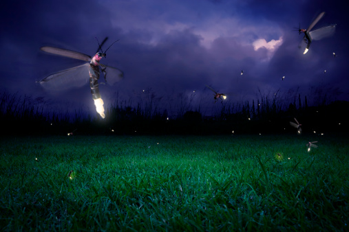 Fireflies At Night Stock Photo - Download Image Now