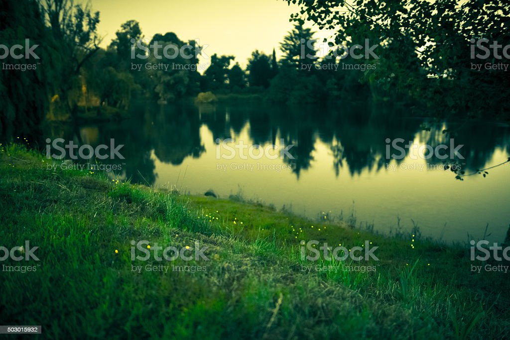 Fireflies by the River in the Night stock photo
