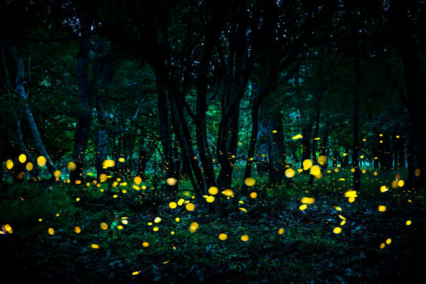 fireflies flying in the forest at twilight. - ethereal stock pictures, royalty-free photos & images